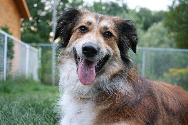 Granule pro psy – jak se vyznat v etiketě