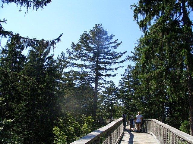 Kde u nás najdete Stezky korunami stromů