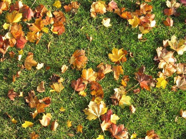 Jak vybrat podzimní hnojivo pro trávník