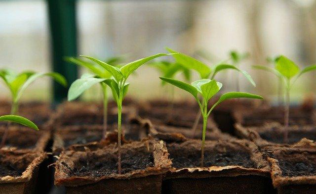 Pěstování zeleniny – Co kdy vysévat
